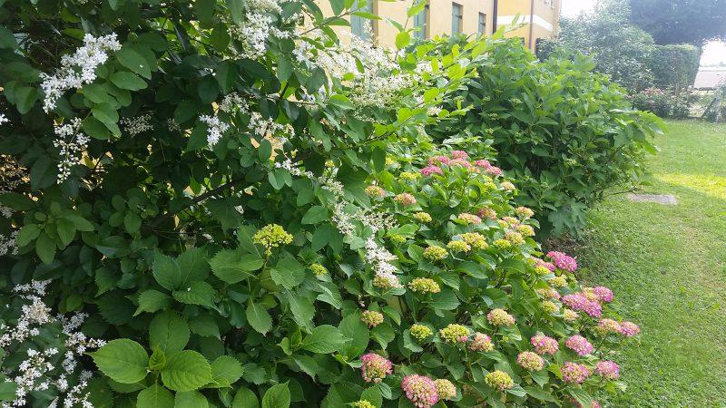 Agriturismo Lemene - giardino